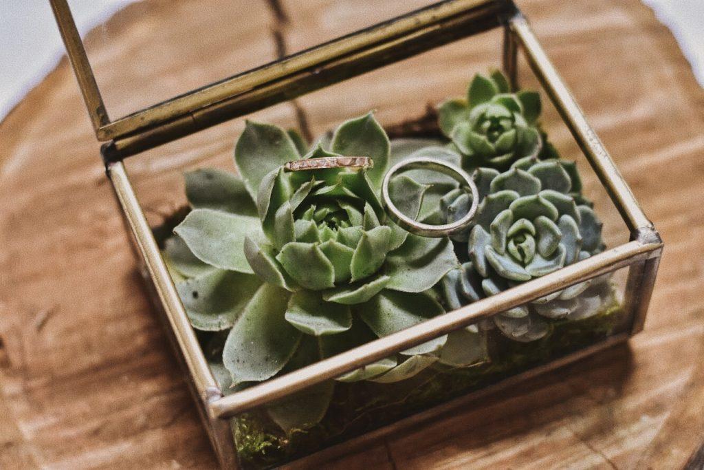 esküvő dekor, pozsgás, kövirózsa,gyűrű